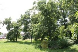 Lot with mature trees  of 1001 Paine